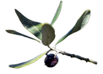 """Expo """"Le temps des olives"""""""